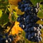 Ruta del Vino de Jumilla pone en marcha el I Concurso de Fotografía 'Beber con los ojos'