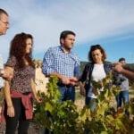 La DO Jumilla estima alcanzar esta campaña 70 millones de kilos de producción de uva de gran calidad