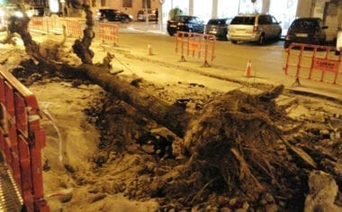 Cs Jumilla califica de desastre ecológico el arranque de árboles de Avd. de Levante