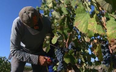 Un acuerdo entre la Unión Europea y Estados Unidos pone fin a los aranceles extraordinarios al vino