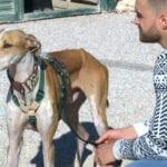 La asociación 4 Patas Jumilla celebrará durante los próximos días la Semana de los Animales