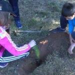 Aprobada la moción para la implantación de un programa de reforestación en el ámbito escolar, presentada por Ciudadanos