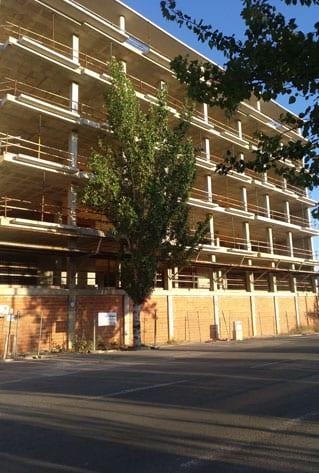 En la remodelación de la Avenida está previsto arrancar los chopos