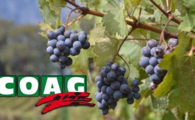 COAG pide medidas extraordinarias para evitar el colapso del mercado vinícola