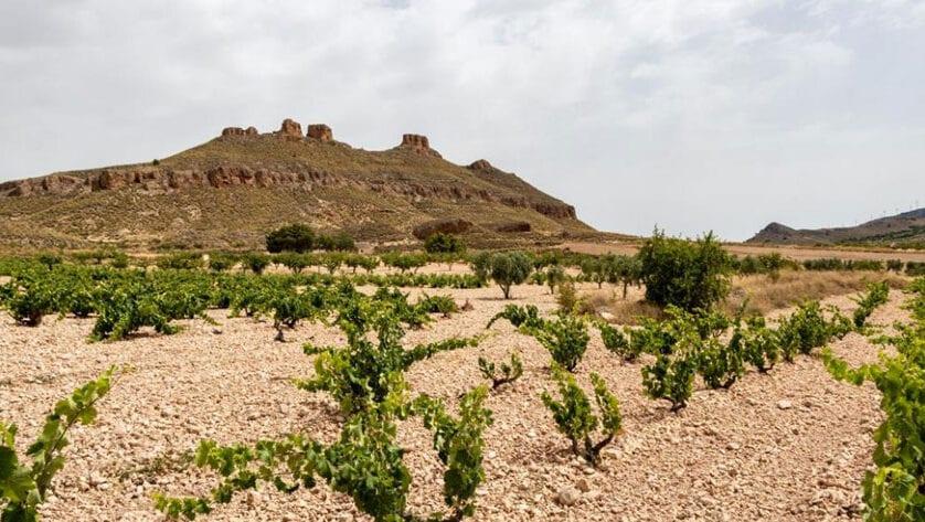 La guía Wine Up! visitó la DOP Jumilla y cató los vinos para su edición 2021