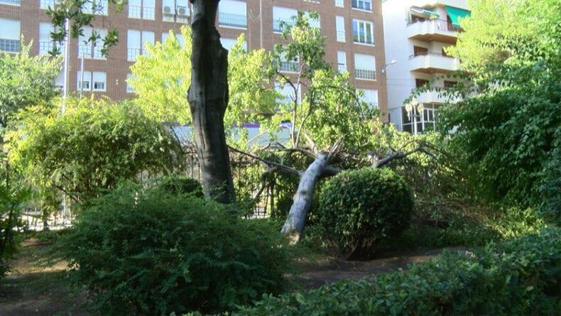 Daños en el Jardín del Rey Don Pedro con la caída de varios árboles y ramas