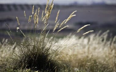 El Ayuntamiento abre el plazo para solicitar aprovechamientos de pastos, esparto y plantas aromáticas en montes públicos