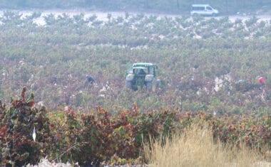 La Comunidad publica la guía con medidas para prevenir la Covid-19 en explotaciones agrarias e industrias agroalimentarias