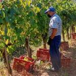 El paro agrícola subió un 23,59% en el tercer trimestre hasta alcanzar las 207.800 personas, según la EPA