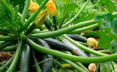 ASAJA, COAG Y UPA denuncian los precios de ruina que soportan los agricultores en el arranque de la campaña de hortalizas de invierno