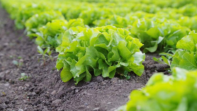 La UE aplaza a 2022 la aplicación del nuevo reglamento de agricultura ecológica