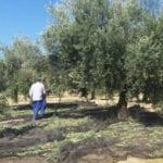 Se mantiene la huelga en el campo y los almacenes agrícolas para el 4 de diciembre