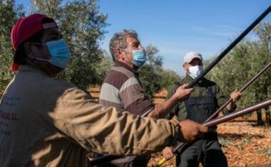 """UPA pide """"respeto, apoyo y formación"""" para los migrantes en el medio rural"""