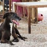 Desciende el número de abandonos de animales en Jumilla por primera vez desde que hay registros