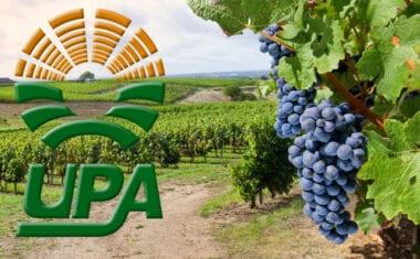 """UPA asegura que """"el vino es, sin duda, el sector agrícola que peor lo está pasando"""""""