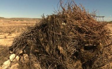 COAG recomienda a sus agricultores que quemen los restos de poda con riesgo de plaga