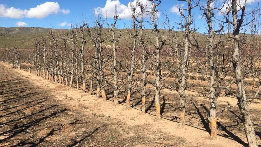 El PP pide al Gobierno local que actúe urgentemente para prevenir los daños agrícolas causados por una plaga de conejos en La Cañada