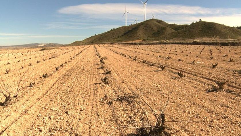 El PP solicita al Equipo de gobierno que informe a la ciudadanía de la nueva normativa regional sobre eliminación de restos vegetales
