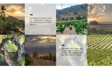 La DOP Jumilla presenta sus canales de comunicación en China