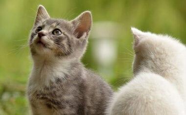 Bienestar Animal y 4 Patas se reunirán el 15 de mayo para coordinar nuevas acciones del Proyecto CER