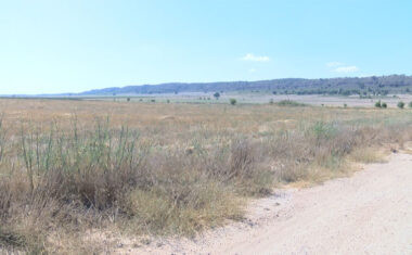 Stipa sigue denunciando el negativo impacto ambiental que suponen los proyectos fotovoltaicos que pretenden instalarse en Jumilla