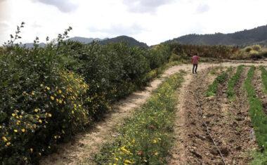 El IMIDA anima a plantar en las explotaciones agrícolas de la Región setos y estructuras vegetales creadas con especies autóctonas