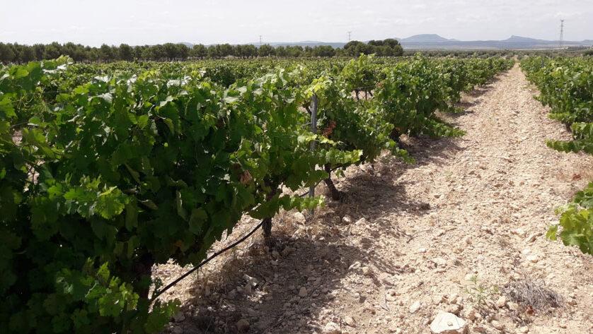 """Esta tarde se presentan los resultados del proyecto """"Calidad y diferenciación como claves de la competitividad vinícola"""""""