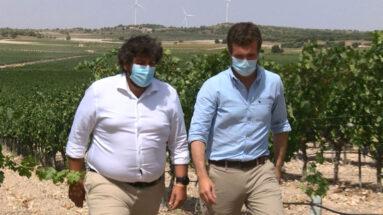 Pablo Casado y Fernando López Miras recorriendo los viñedos