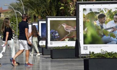 La exposición está ubicada en la Avenida de la Libertad, una zona céntrica y peatonal