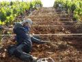 La Comunidad abre el plazo para la concesión de 11 millones en ayudas para modernizar explotaciones agrícolas y ganaderas